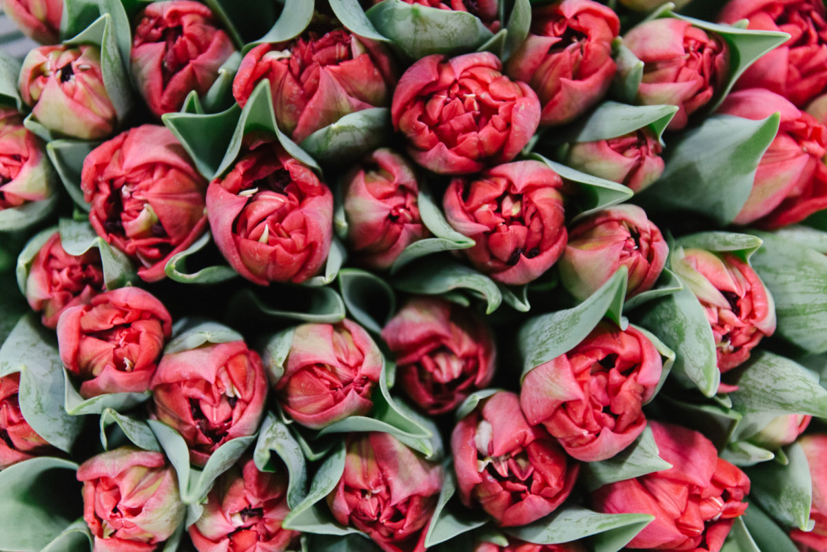 New Covent Garden Flower Market February 2018 In Season Report Rona Wheeldon Flowerona Rococo Double Tulip At Zest Flowers