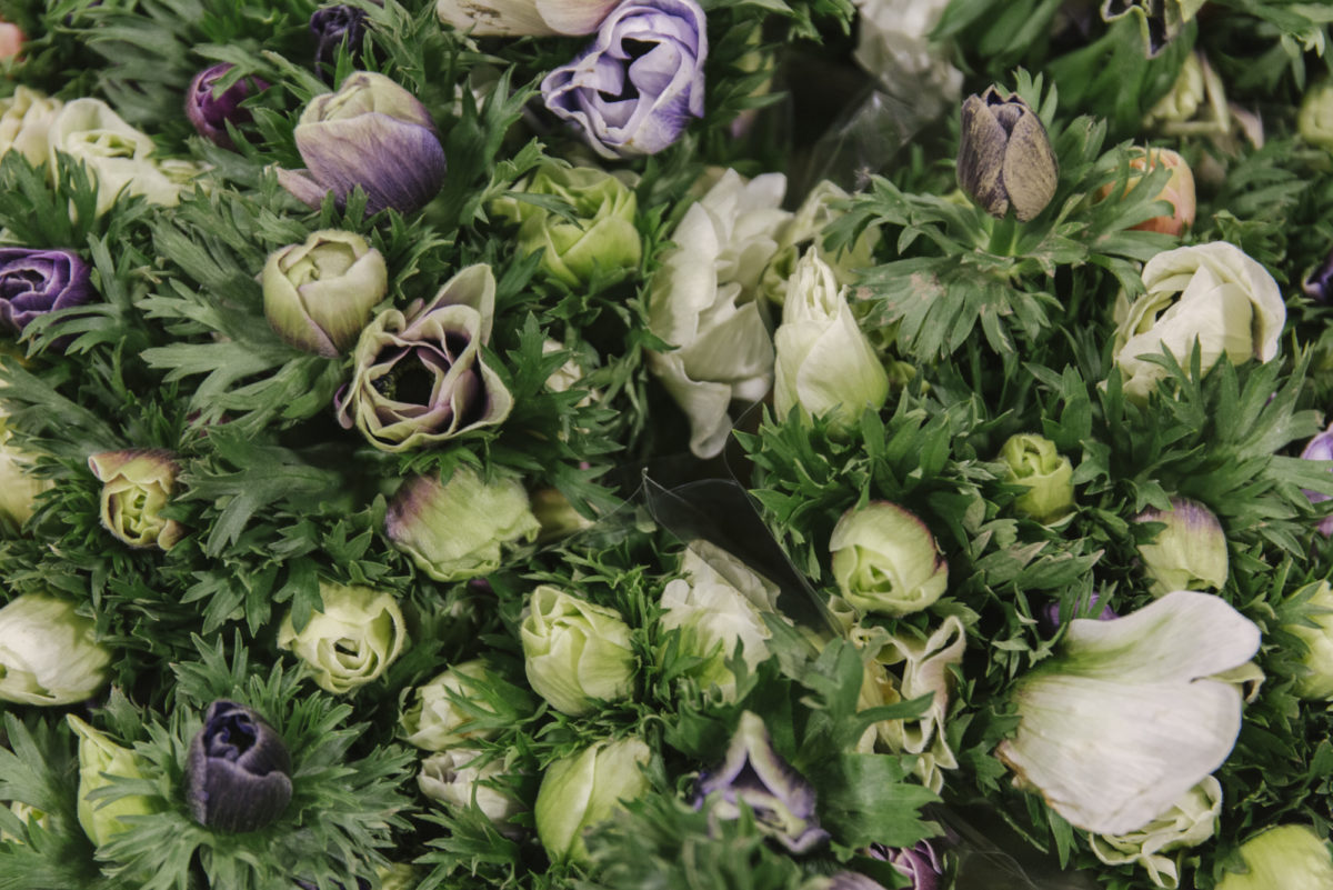 New Covent Garden Flower Market February 2019 A Florists Guide To Anemones Rona Wheeldon Flowerona Anemone Galil Pastel At Zest Flowers