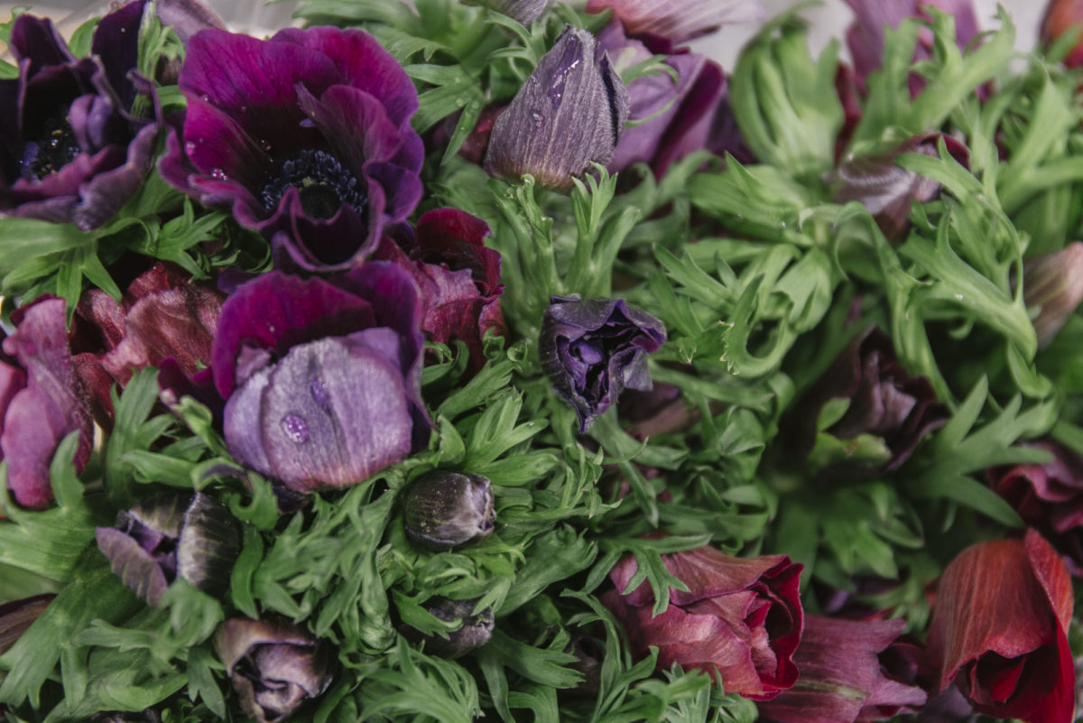 New Covent Garden Flower Market February 2019 A Florists Guide To Anemones Rona Wheeldon Flowerona Anemone Meron Bordeaux Bloomfield 1