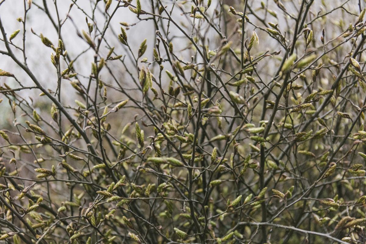 New Covent Garden Flower Market February 2019 In Season Report Rona Wheeldon Flowerona British Hornbeam At Gb Foliage