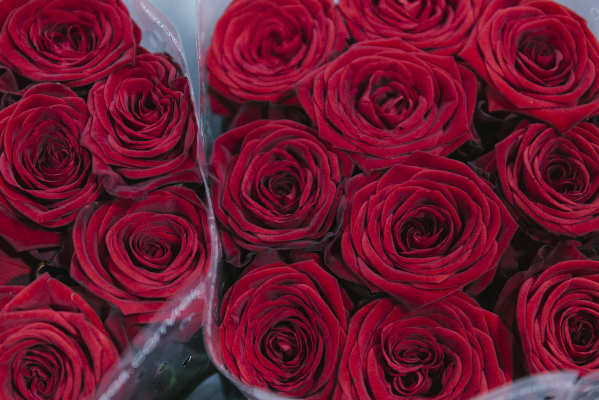 New Covent Garden Flower Market February 2019 In Season Report Rona Wheeldon Flowerona Red Naomi Rose At Bloomfield