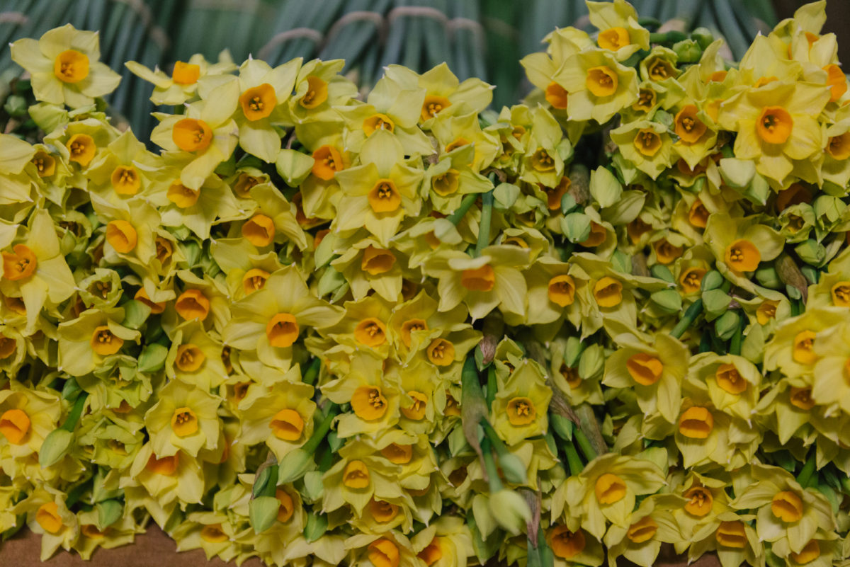 New Covent Garden Flower Market In Season Report November 2017 Rona Wheeldon Flowerona British Innisidgen Narcissi At Pratley