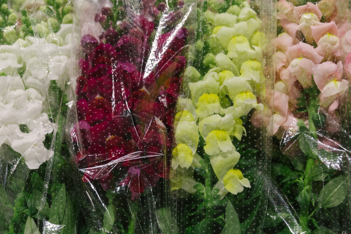 New Covent Garden Flower Market In Season Report November 2017 Rona Wheeldon Flowerona British Mixed Antirrhinums At Pratley