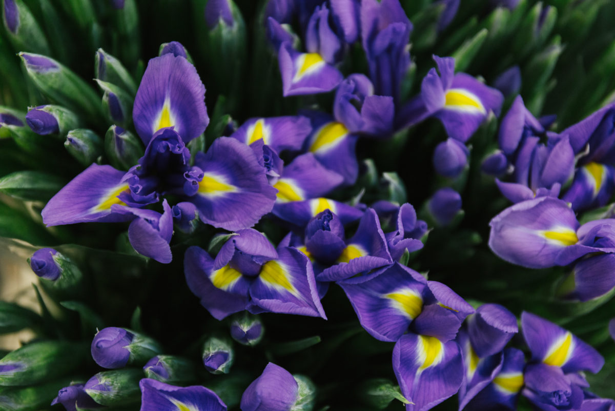 New Covent Garden Flower Market In Season Report November 2017 Rona Wheeldon Flowerona Iris Blue Magic At R French Sons