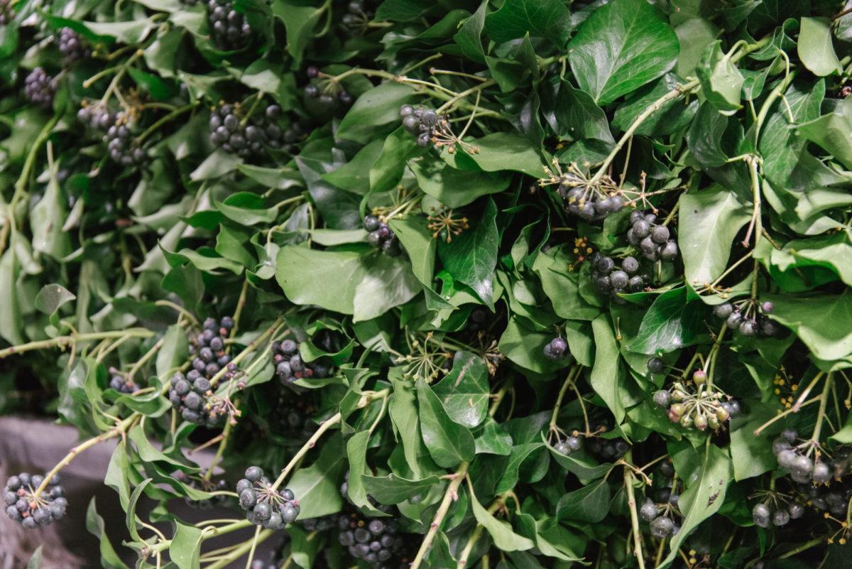 New Covent Garden Flower Market January 2018 In Season Report Rona Wheeldon Flowerona British Berried Ivy At Gb Foliage