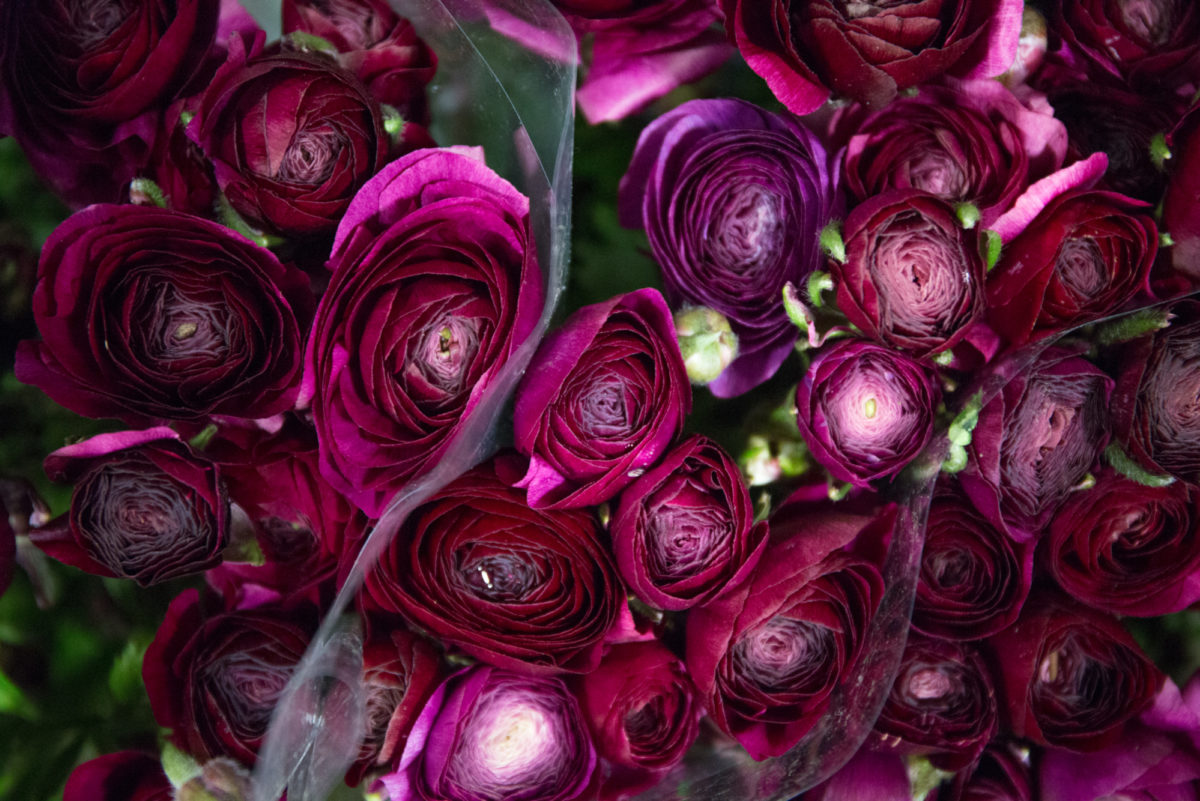 New Covent Garden Flower Market January 2018 In Season Report Rona Wheeldon Flowerona Ranunculus Pauline Violet At Dg Wholesale Flowers