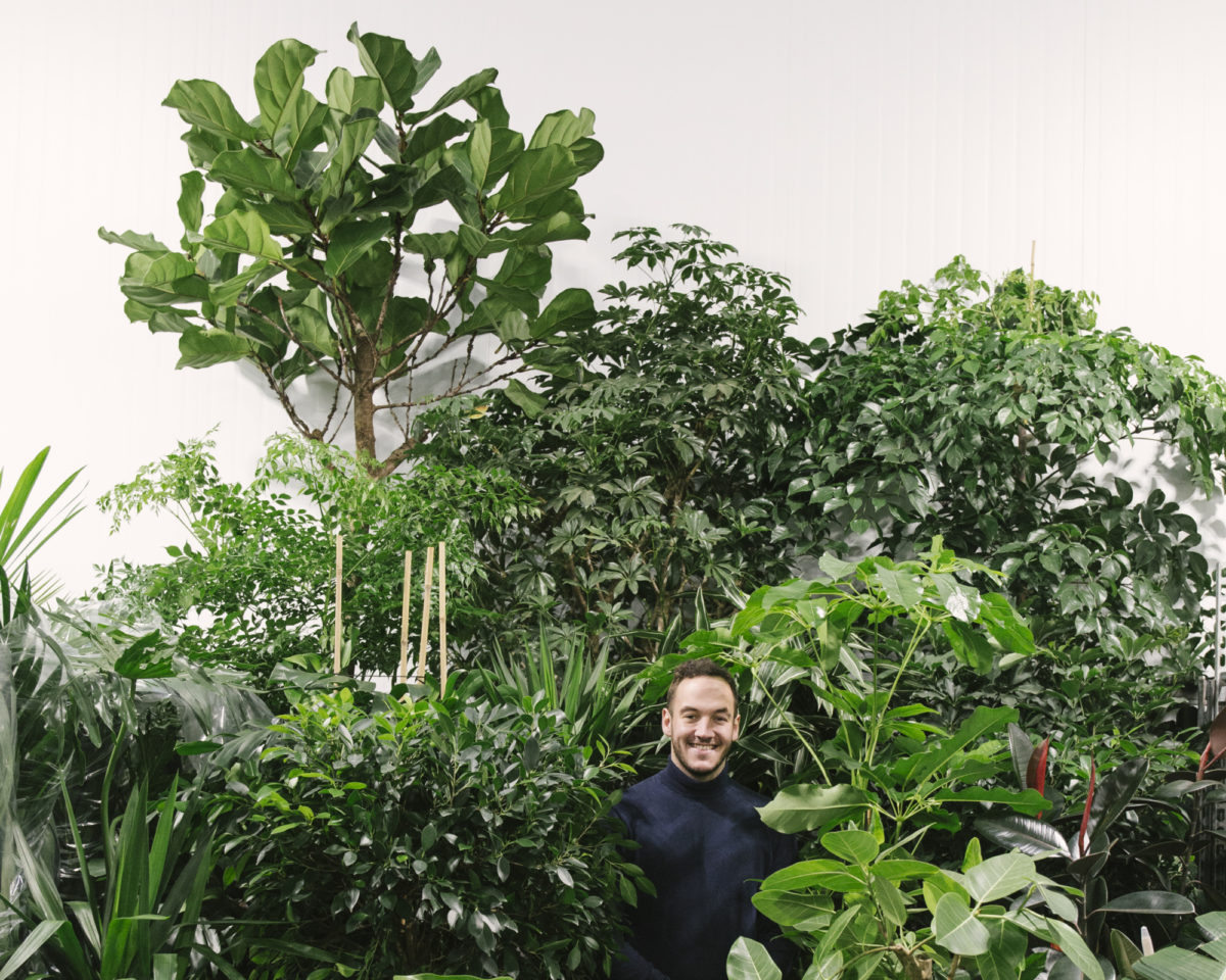 New Covent Garden Flower Market January 2019 In Season Report Rona Wheeldon Flowerona 2 Metre High Specimen Plants With Freddie At Arnott Mason