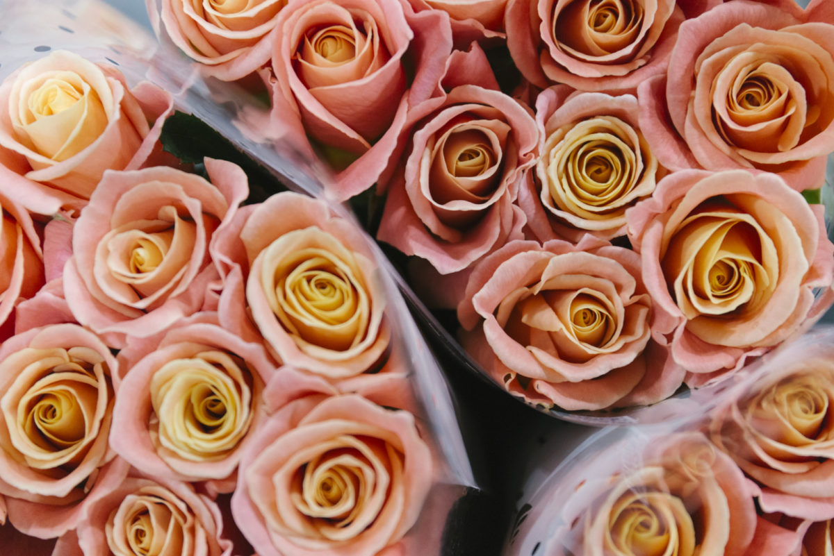 New Covent Garden Flower Market January 2019 In Season Report Rona Wheeldon Flowerona Miss Piggy Rose At Bloomfield