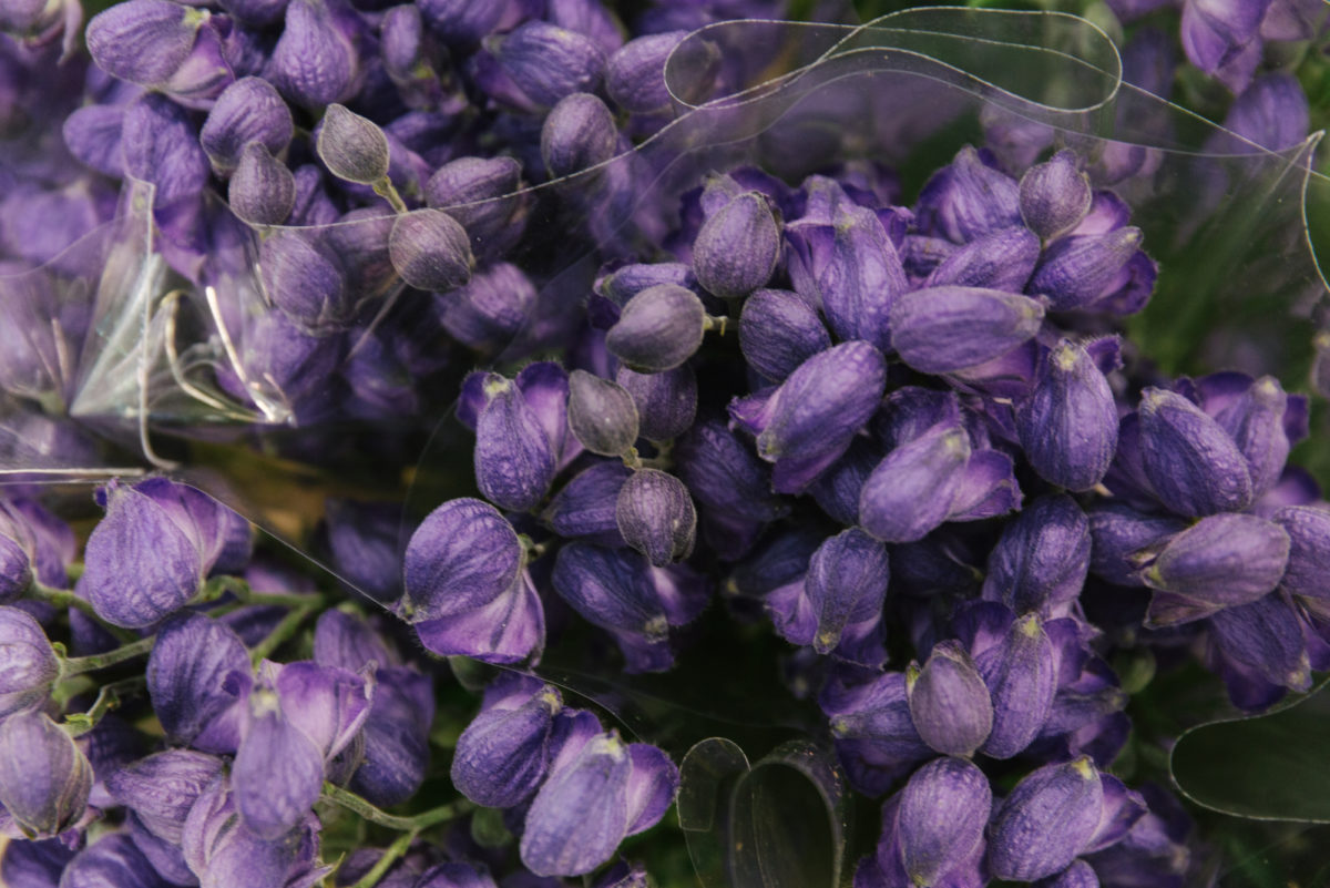 New Covent Garden Flower Market July 2018 A Florists Guide To Ultra Violet Pantone Colour Of The Year 2018 Rona Wheeldon Flowerona Aconitum At Zest Flowers