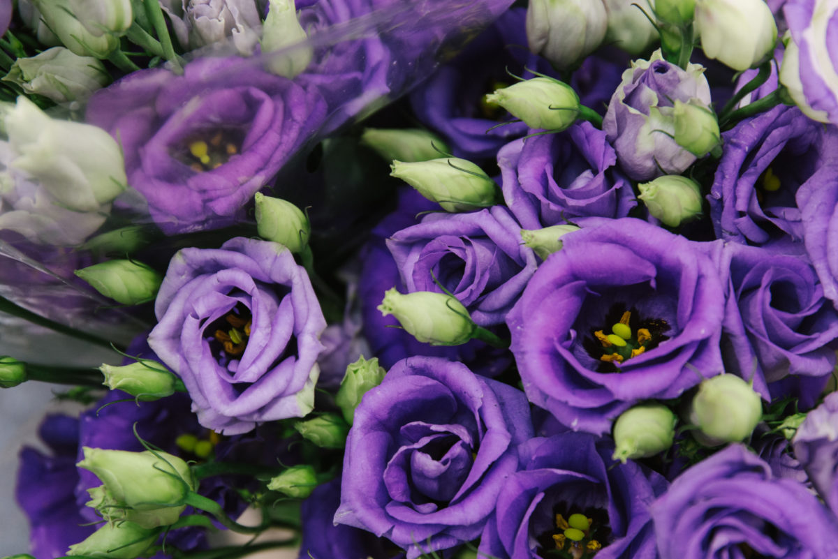 New Covent Garden Flower Market July 2018 A Florists Guide To Ultra Violet Pantone Colour Of The Year 2018 Rona Wheeldon Flowerona Eustoma Russellianum Rosita Blue At R French Sons