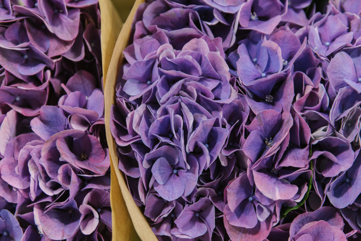 New Covent Garden Flower Market July 2018 A Florists Guide To Ultra Violet Pantone Colour Of The Year 2018 Rona Wheeldon Flowerona Hydrangea Glowing Alps Purple At D G Wholesale Flowers