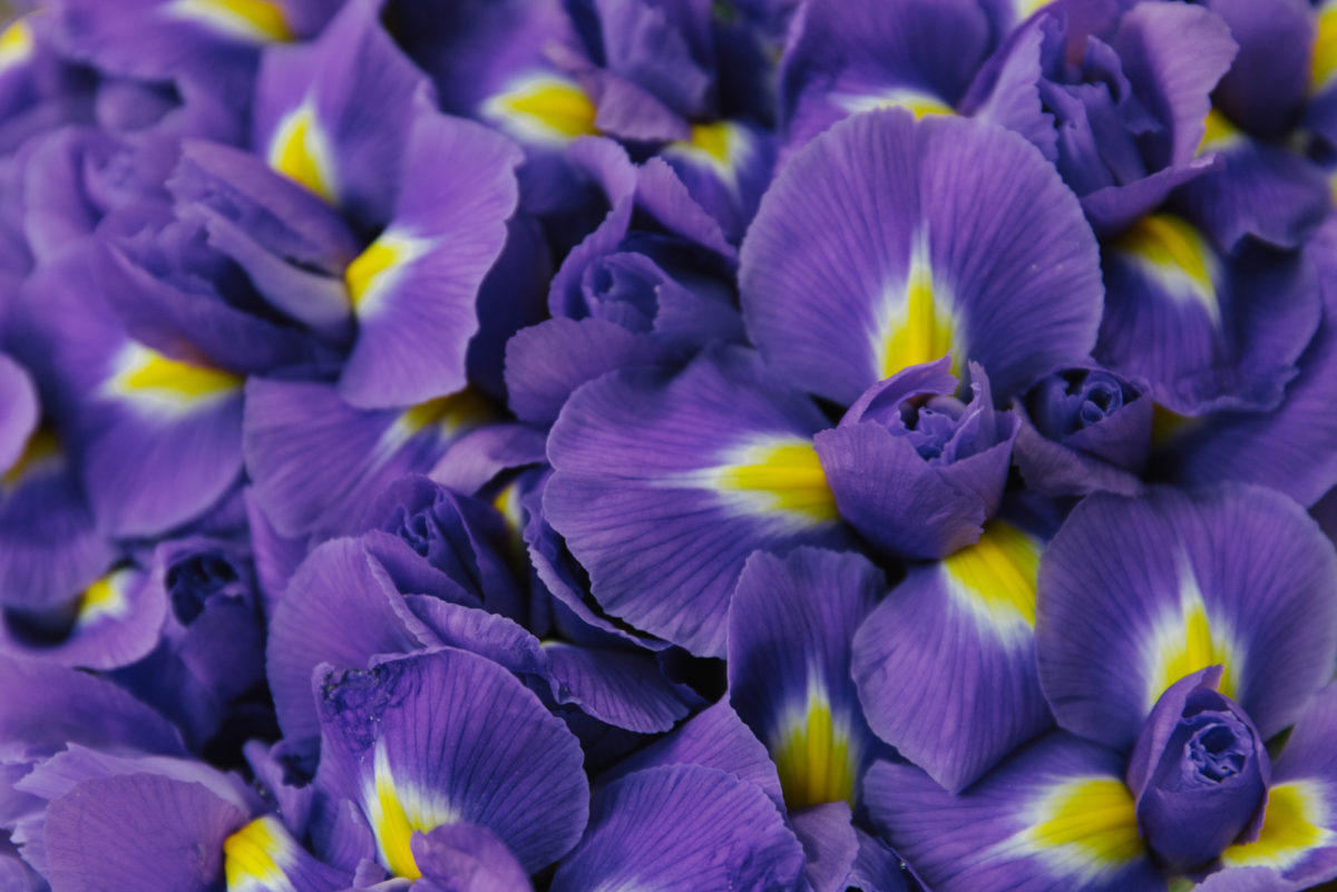A florist's guide to ultra violet