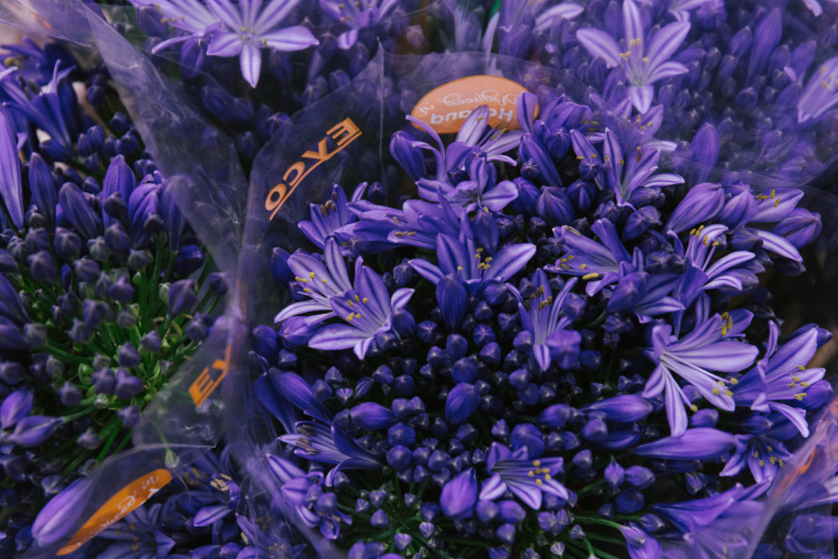 New Covent Garden Flower Market June 2018 In Season Report Rona Wheeldon Flowerona Agapanthus Atlantic Ocean At Dg Wholesale Flowers