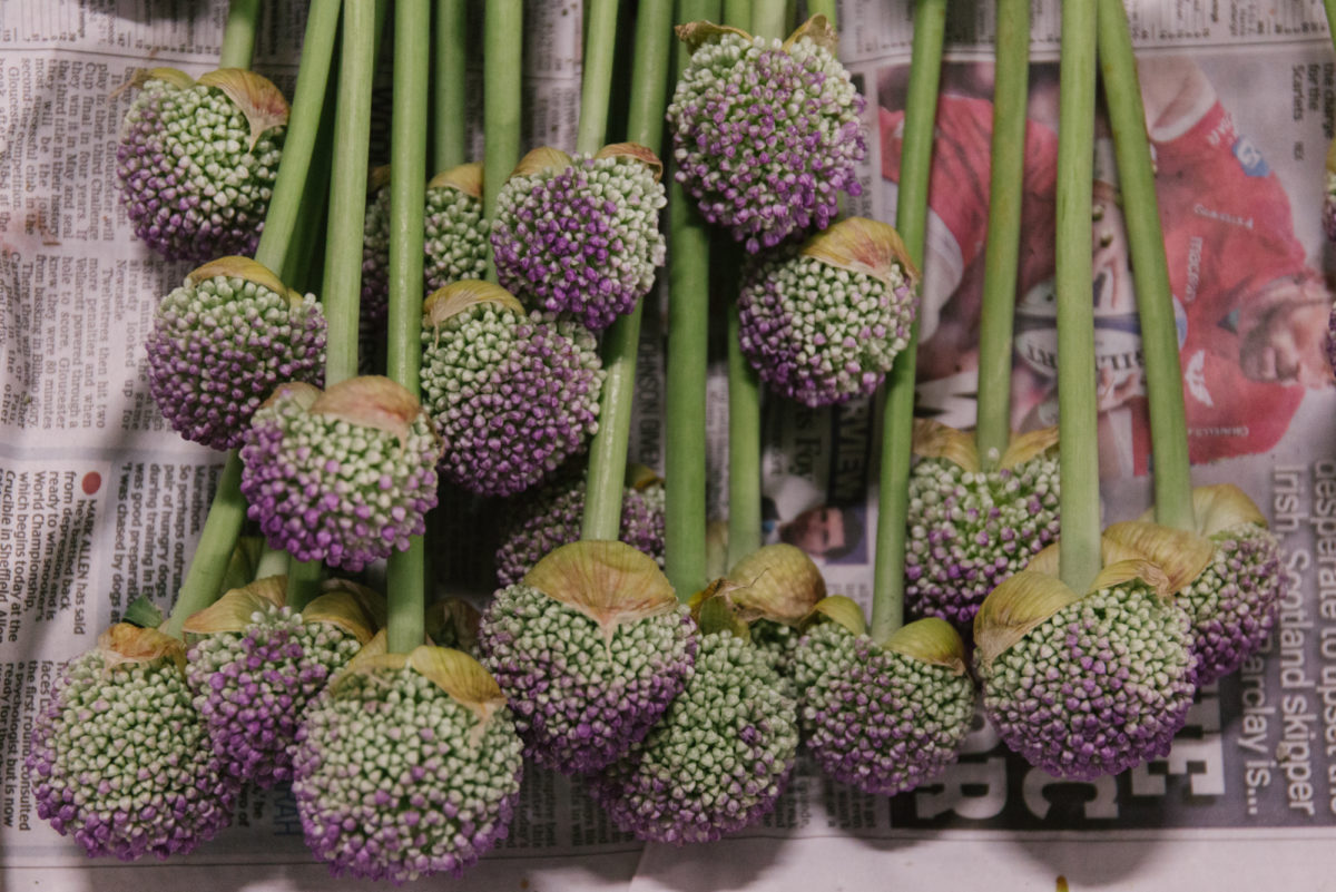 New Covent Garden Flower Market June 2018 In Season Report Rona Wheeldon Flowerona British Drumstick Alliums At Pratley