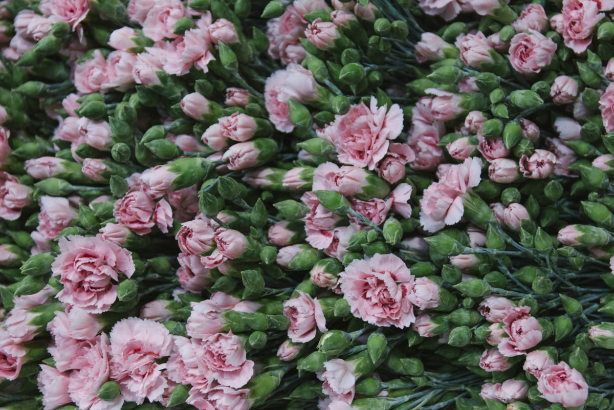 New Covent Garden Flower Market June 2019 A Florists Guide To British Flowers Rona Wheeldon Flowerona British Pinks At Pratley
