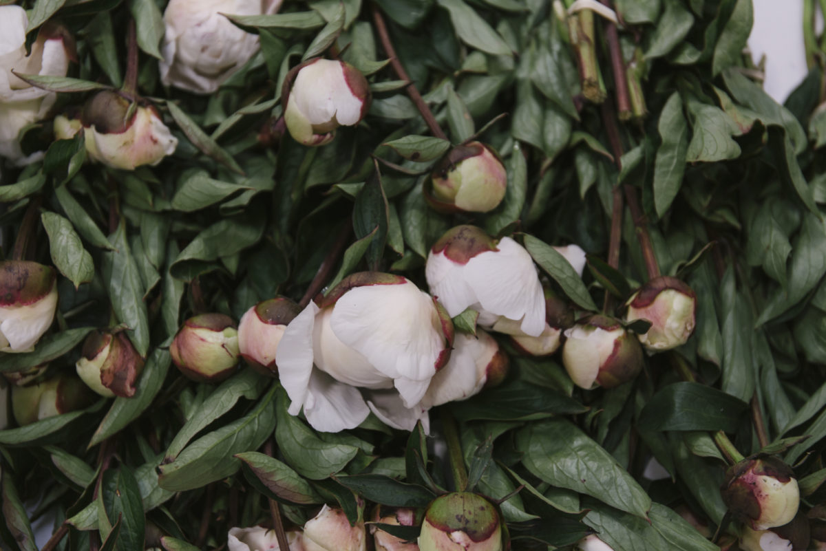 New Covent Garden Flower Market June 2019 A Florists Guide To British Flowers Rona Wheeldon Flowerona British White Peonies At Pratley