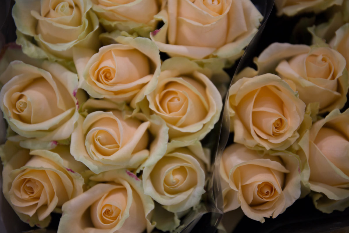 New Covent Garden Flower Market March 2018 In Season Report Rona Wheeldon Flowerona Avalanche Peach Roses At Zest Flowers