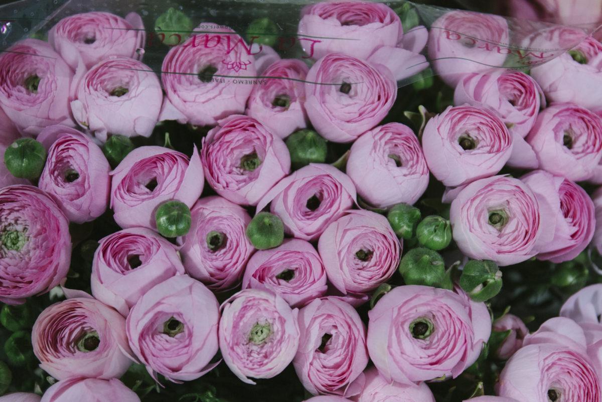 New Covent Garden Flower Market March 2019 A Florists Guide To Ranunculus Rona Wheeldon Flowerona Pink Cloni Ranunculus At Dg Wholesale Flowers 1