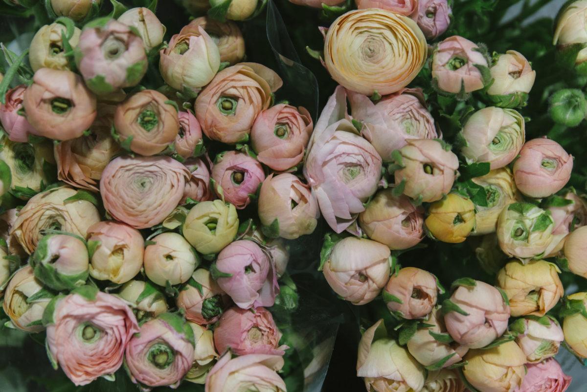 New Covent Garden Flower Market March 2019 A Florists Guide To Ranunculus Rona Wheeldon Flowerona Salmon Elegance Ranunculus At Dg Wholesale Flowers