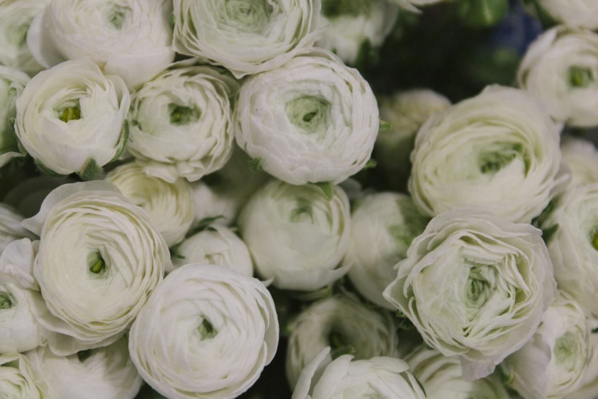 New Covent Garden Flower Market March 2019 A Florists Guide To Ranunculus Rona Wheeldon Flowerona White Elegance Ranunculus At Zest Flowers