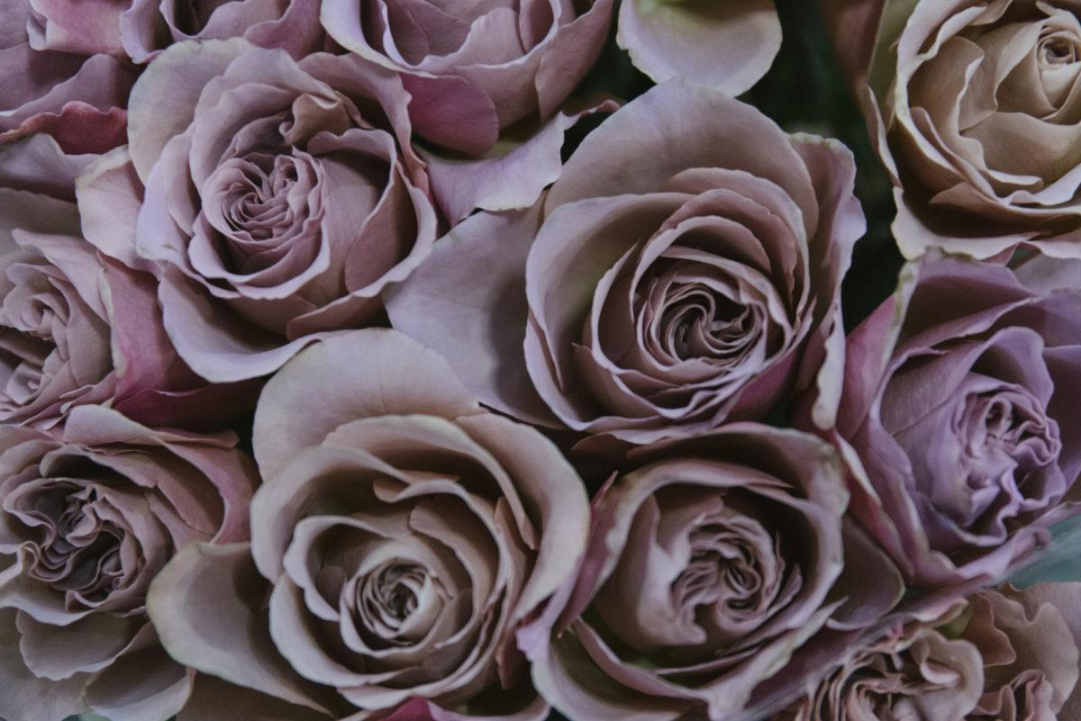 New Covent Garden Flower Market March 2019 In Season Report Rona Wheeldon Flowerona Cafe Latte Roses At Zest Flowers