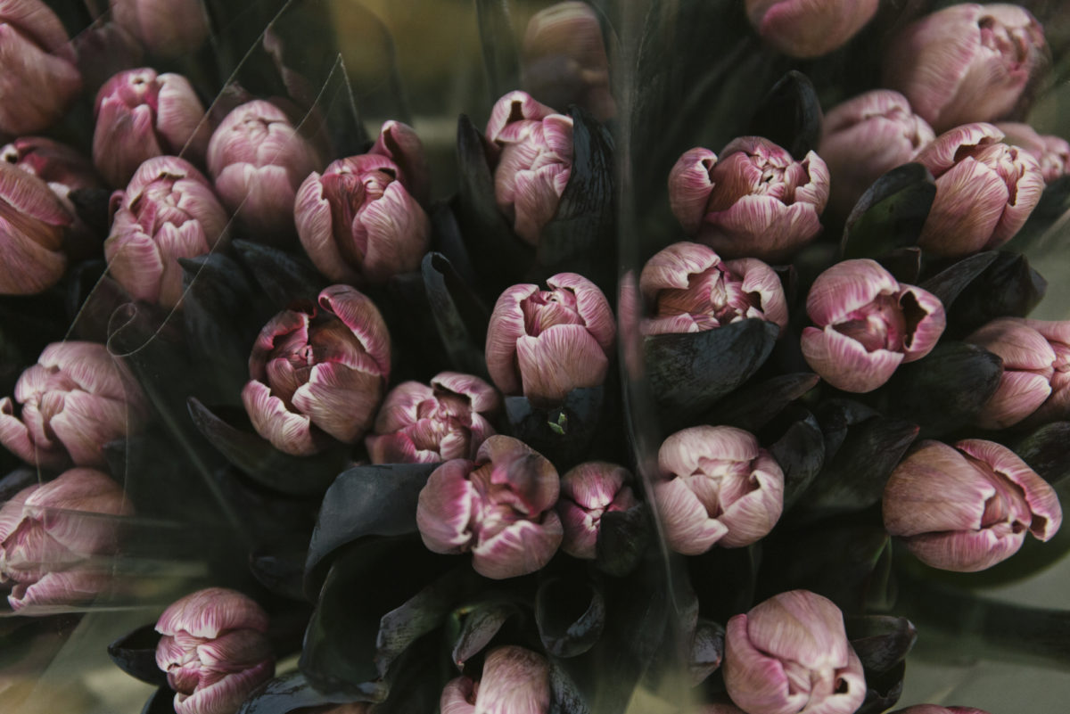 New Covent Garden Flower Market March 2019 In Season Report Rona Wheeldon Flowerona Dyed Brownies Tulips At The Floral Garden Group