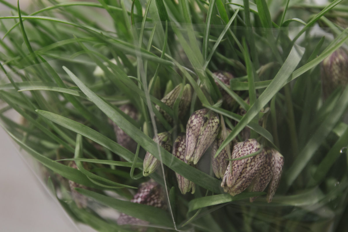 New Covent Garden Flower Market March 2019 In Season Report Rona Wheeldon Flowerona Fritillaria Meleagris At Bloomfield