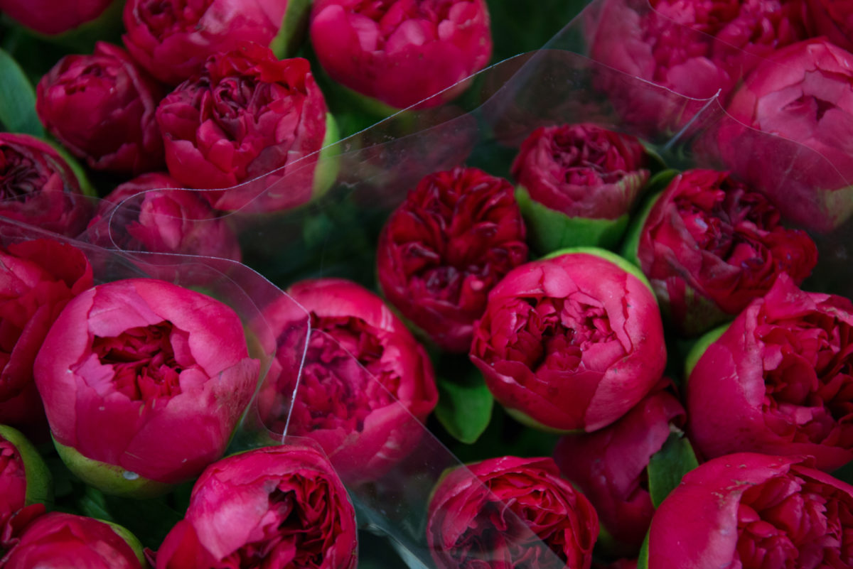 New Covent Garden Flower Market May 2018 A Florists Guide To Peonies Rona Wheeldon Flowerona Command Performance Peony At Dg Wholesale Flowers