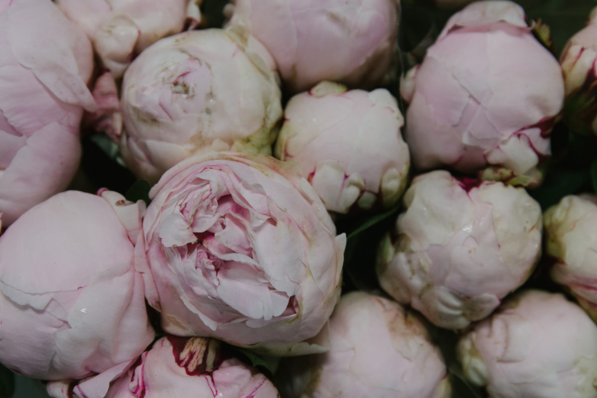 New Covent Garden Flower Market May 2018 A Florists Guide To Peonies Rona Wheeldon Flowerona Reine Hortense Peony At Dennis Edwards Flowers