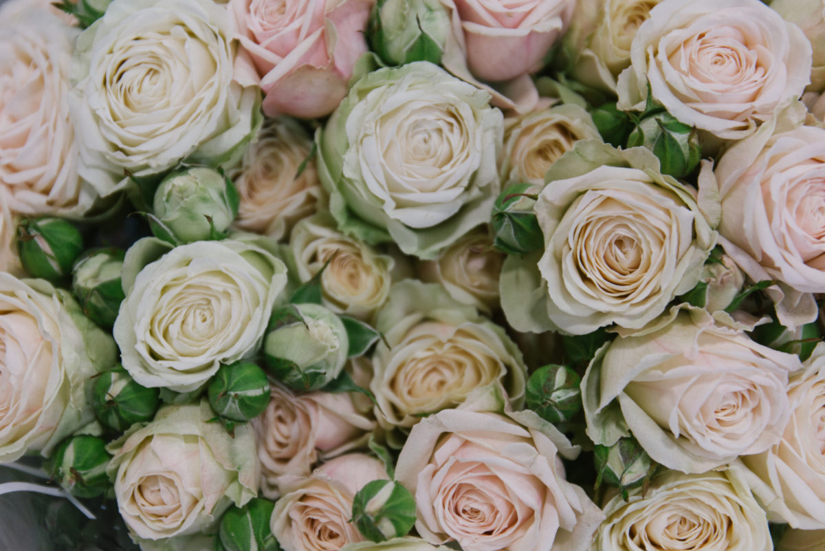 New Covent Garden Flower Market May 2018 In Season Report Rona Wheeldon Flowerona ' Malaya Gem' Spray Rose At Dg Wholesale Flowers