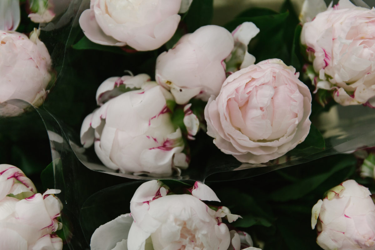 New Covent Garden Flower Market May 2018 In Season Report Rona Wheeldon Flowerona Shirley Temple Peonies At Zest Flowers