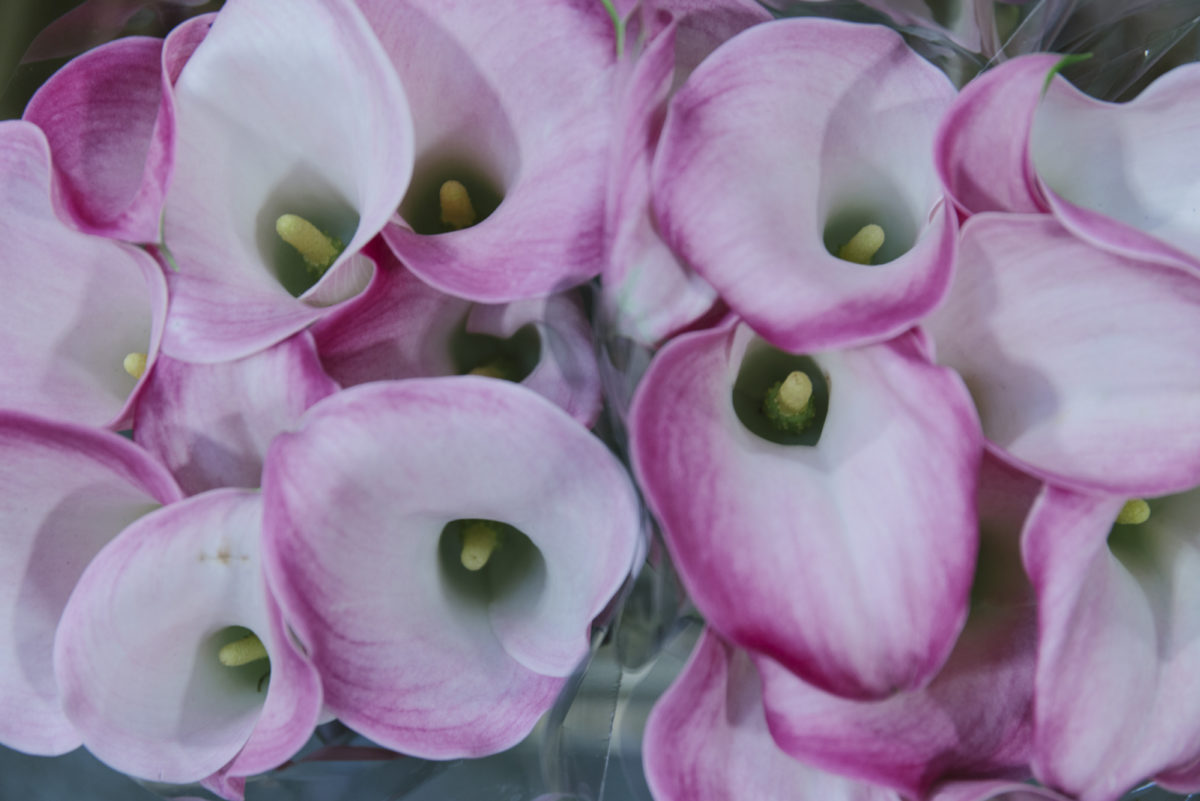 New Covent Garden Flower Market May 2019 A Florists Guide To Calla Lilies Rona Wheeldon Flowerona Calla Lily Captain Alma At Floral Garden Group