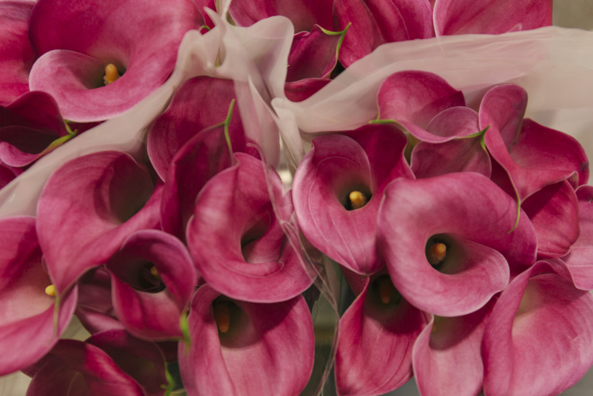 New Covent Garden Flower Market May 2019 A Florists Guide To Calla Lilies Rona Wheeldon Flowerona Calla Lily Captain Samba At Dg Wholesale Flowers