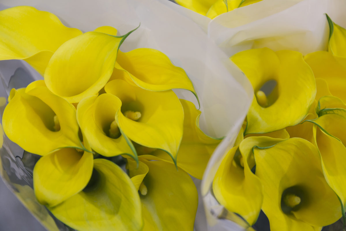 New Covent Garden Flower Market May 2019 A Florists Guide To Calla Lilies Rona Wheeldon Flowerona Calla Lily Captain Solo At Dg Wholesale Flowers