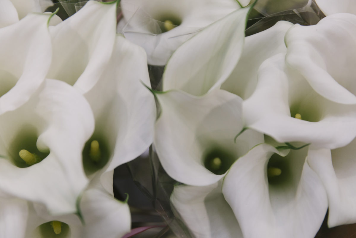 New Covent Garden Flower Market May 2019 A Florists Guide To Calla Lilies Rona Wheeldon Flowerona Calla Lily Signum At Bloomfield