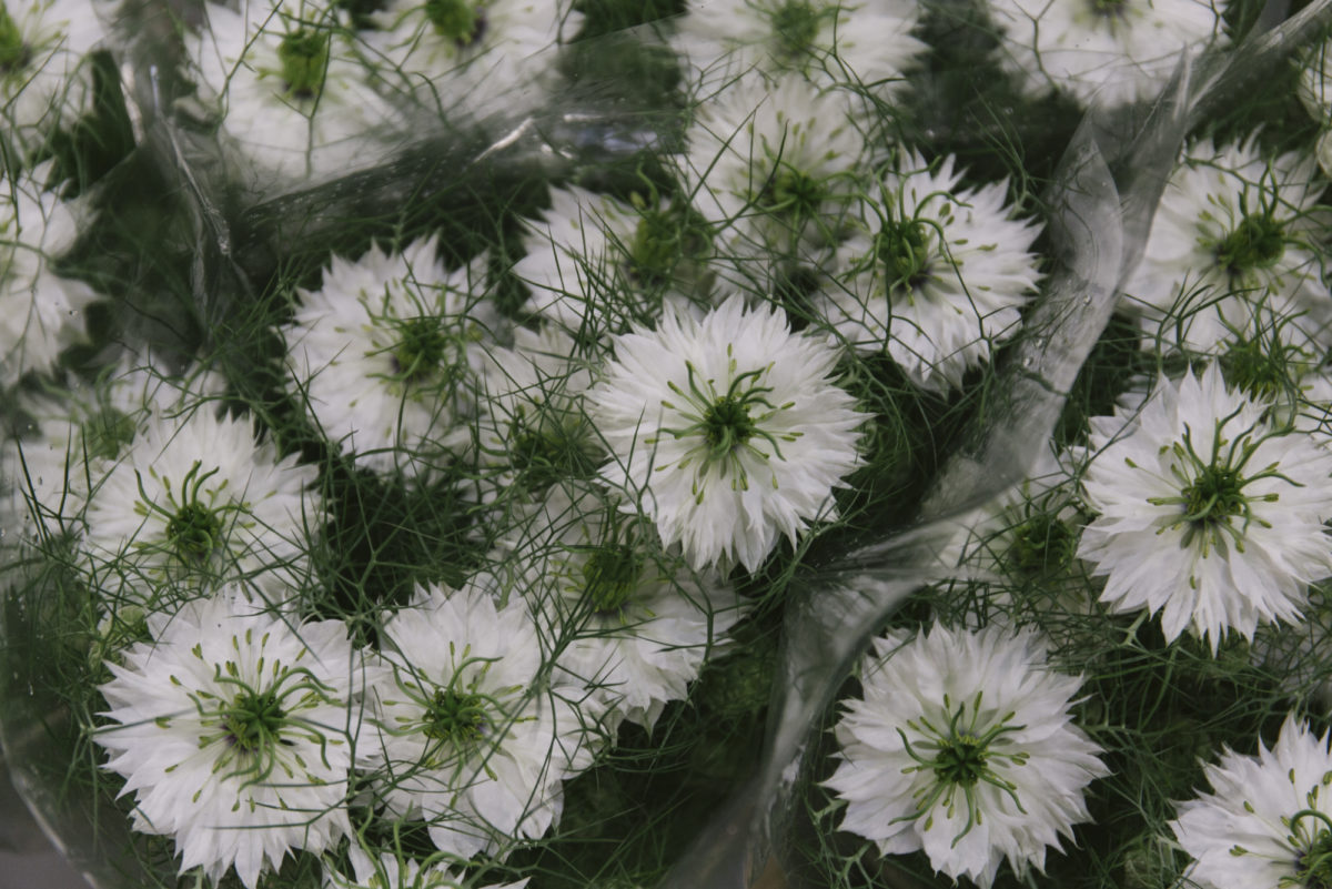 New Covent Garden Flower Market May 2019 In Season Report Rona Wheeldon Flowerona White Nigella At Zest Flowers