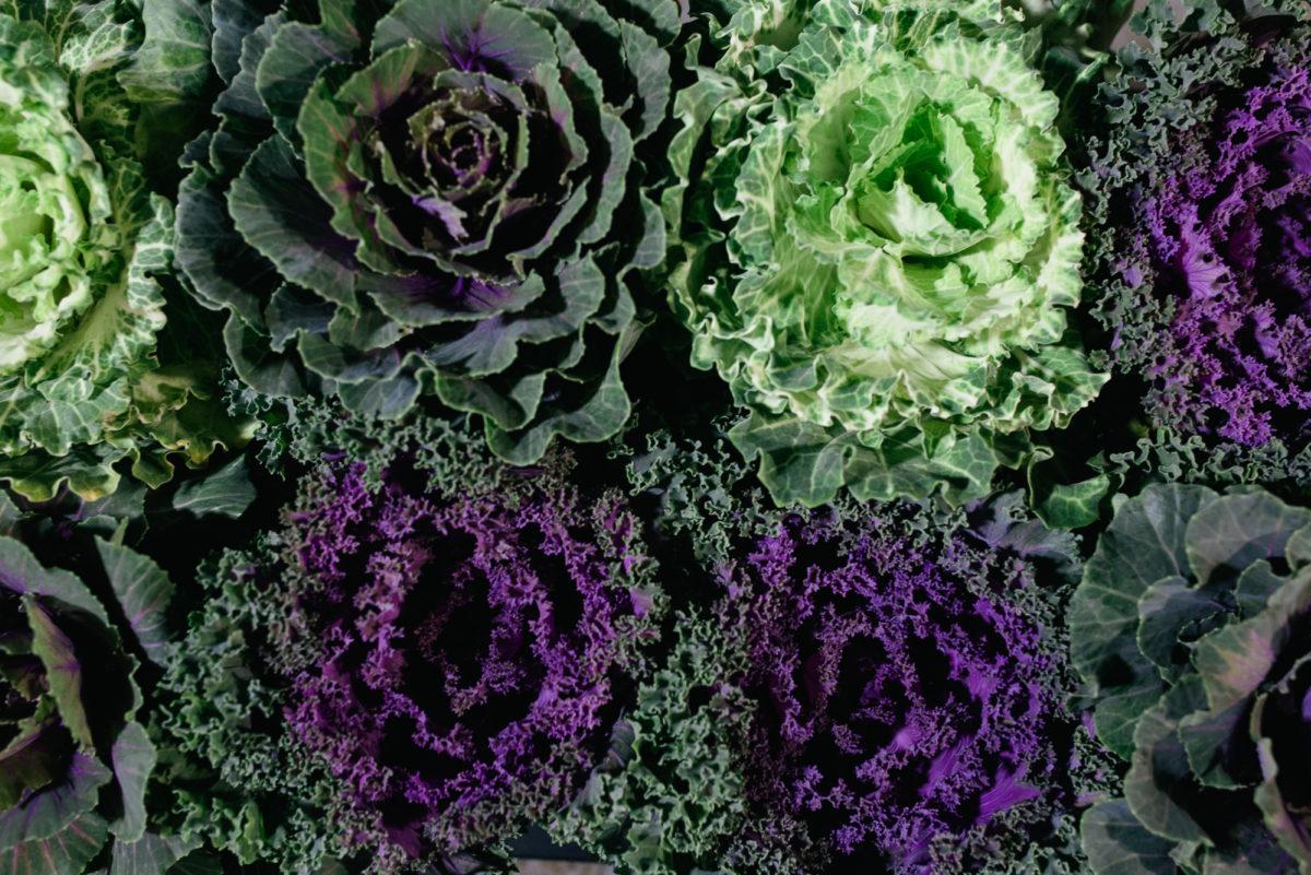 New Covent Garden Flower Market October 2017 Flower Market Report Brassica At Evergreen Exterior Services