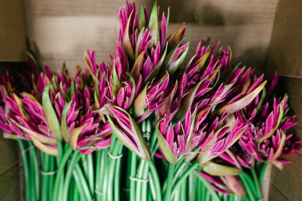 New Covent Garden Flower Market October 2017 Flower Market Report British Zeal Giant Nerines At Pratley