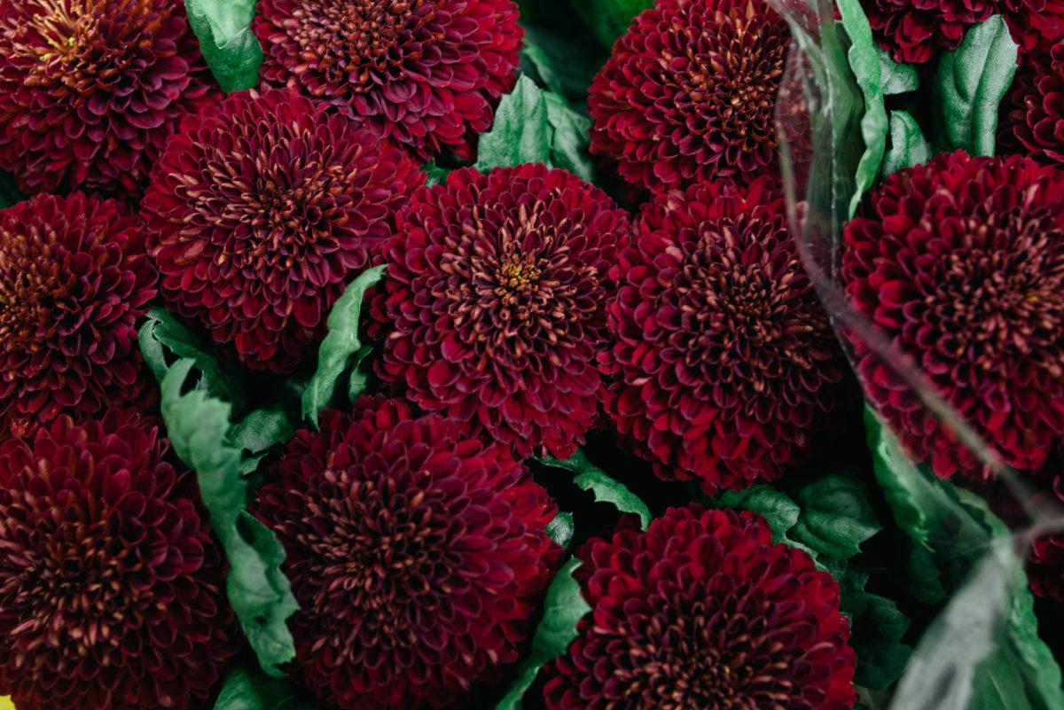 New Covent Garden Flower Market October 2017 Flower Market Report Chrysanthemum Kiev Dark At Dg Wholesale Flowers