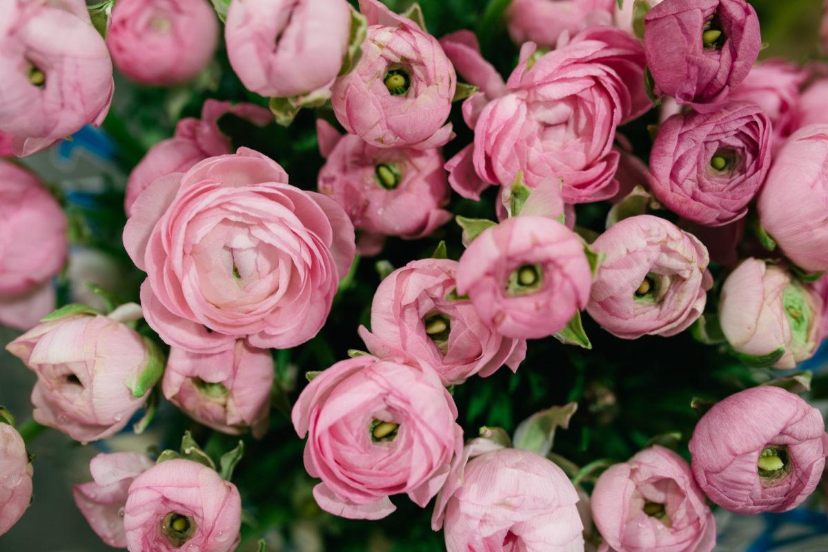 New Covent Garden Flower Market October 2017 Flower Market Report Elegance Pink Ranunculus At Bloomfield
