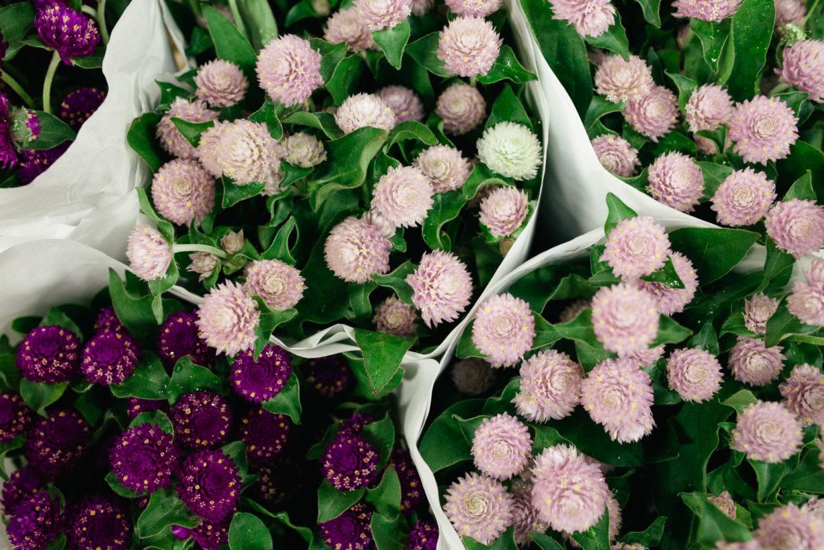 New Covent Garden Flower Market October 2017 Flower Market Report Gomphrena At Dennis Edwards Flowers