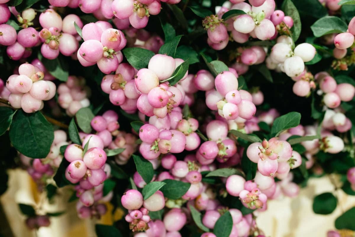 New Covent Garden Flower Market October 2017 Product Profile Report Magical Charming Snowberry At Bloomfield
