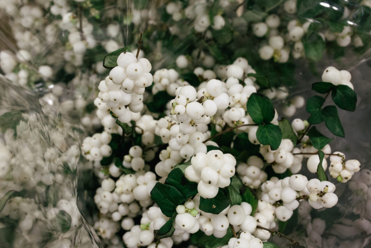 New Covent Garden Flower Market October 2017 Product Profile Report White Pearl Snowberry Deanos Flowers