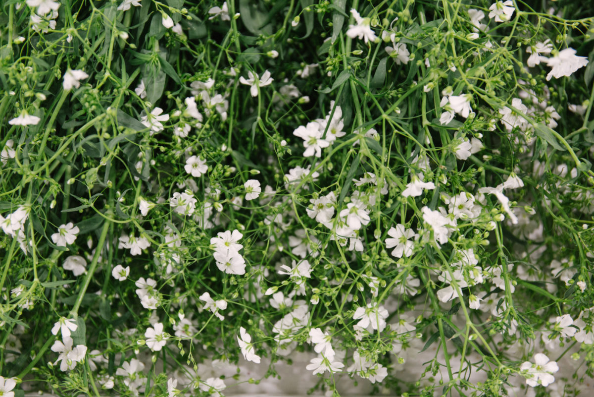 New Covent Garden Flower Market October 2018 In Season Report Rona Wheeldon Flowerona British White Gypsophila At Pratley
