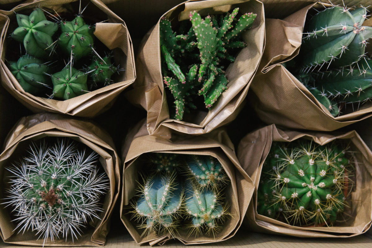 New Covent Garden Flower Market October 2018 In Season Report Rona Wheeldon Flowerona Specimen Cactus Plants At Arnott Mason