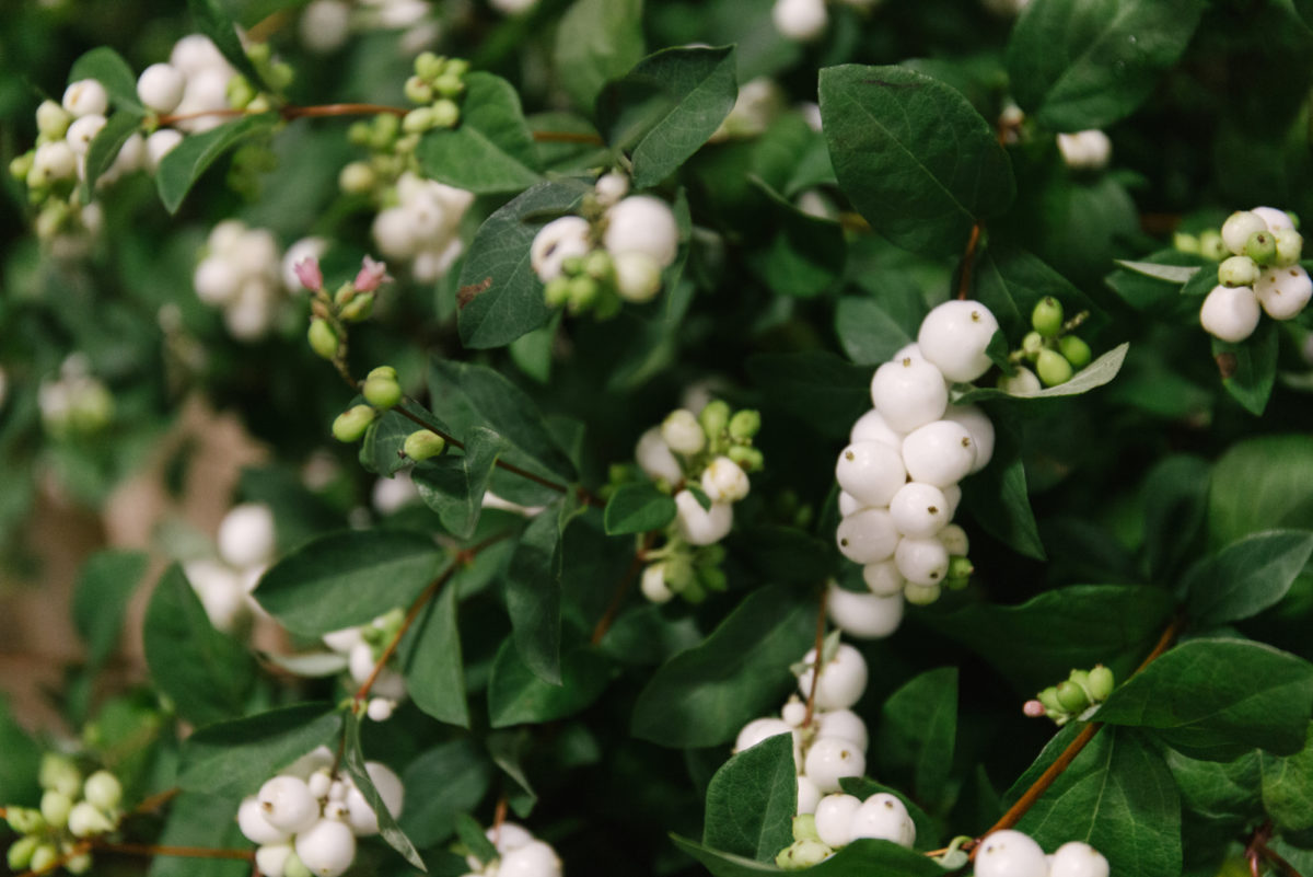 In season at the flower market this new covent garden market new covent garden flower market september 2018 in season report rona wheeldon flowerona british white snowberry mightylinksfo