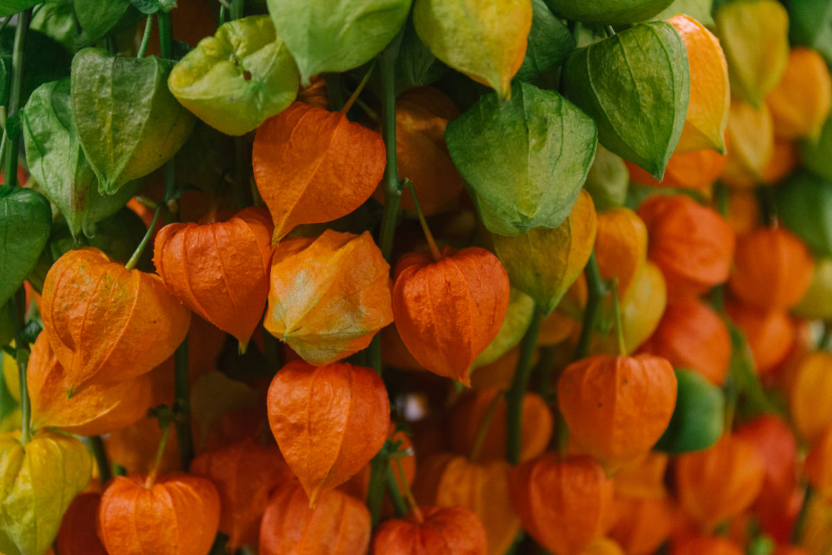 New Covent Garden Flower Market September 2018 In Season Report Rona Wheeldon Flowerona Physalis Lampion At Dennis Edwards Flowers