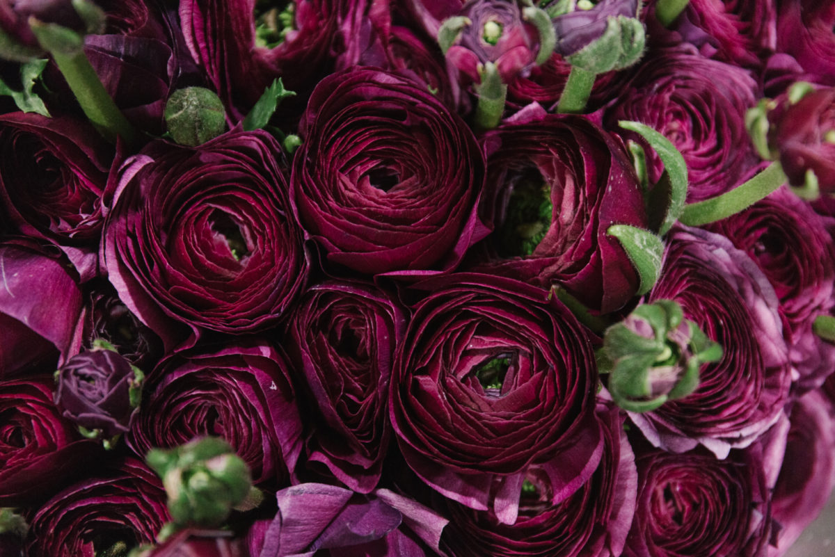 The Hottest Flowers Foliage Plants Sundries Trends For 2018 Rona Wheeldon Flowerona New Covent Garden Flower Market Burgundy Ranunculus At Dg Wholesale Flowers