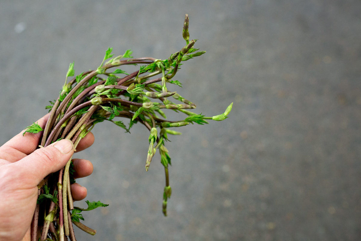 Fruit And Veg Market Report April 2019 Bruscandoli