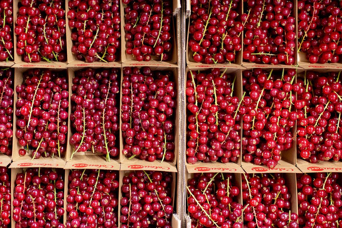 Fruit And Veg Market Report April 2019 Redcurrants